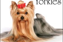 Yorkshire Terriers / The Yorkshire Terrier a little dog with a big heart. / by Rock River Heritage and beyond...