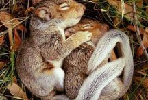 squirrels & chips / by Pinteresting Life