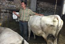 Fattoria didattica - Learning Farm / Not only hand made cheese. Our activity aspire to be also a learning farm, where childrens could play and learn how is the cheese made