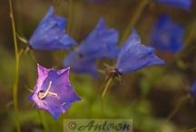 Power of Flower / Zo klein en zo mooi als het wilt zien.