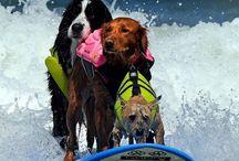 Dogs and sport / Cani che fanno sport