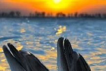 Dolphins / by Sherri Alford