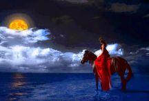CAVALLI - Cheval - Horses - Cavalos
