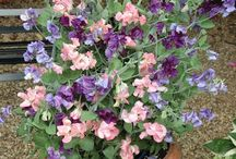 Best Flower For Pots