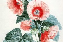 BOTANICALS & other prints