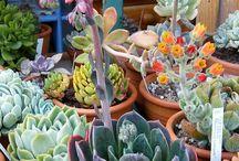 Plants, Indoor