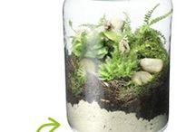 Kleine tuintjes in glas