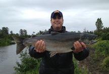 ALASKA FISHING DERBYS!*!*! / Fishing Derbies offered at Alaska Denise Lake Lodge!!!  www.deniselakelodge.com/hot-deals---alaska-fishing-packages.html