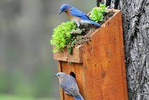 буд.для птахів