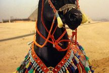 Arabialaiset Hevoset