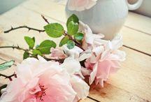 fotos flores