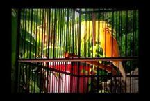 Kicau Burung / kicau burung burung kicau kicau burung kacer kicau burung kenari video penangkaran kacer jalak bali burung laye kicau mania antv murai borneu putri penelope katy perry gambar cewe telanjang murai batu 2010 blackthroat gacor penampakan burung rengganis kicau jarak suren