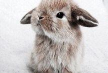 Animals Cute AF