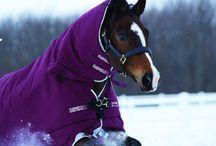 Horses blankets