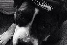 odin the awesome bulldog