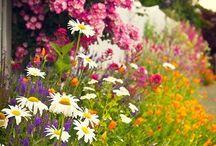 Flower Garden / by Natalie Kellogg