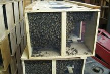 Bees & Beehives