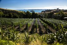 Waiheke Island a Top 10 Destination for 2016 / Waiheke Island is among Lonely Planet's list of top ten destinations for 2016. The recently released list ranked it fifth in the list of best places to visit next year.  From Auckland, Waiheke Island is a 35-minute ferry ride away – an easy day trip well spent exploring one of the hottest regions for 2016. Here are three reasons why we think you should go!