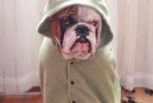 Bulldogs / by Jennifer Newman Easter
