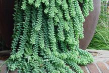 Striking Succulents