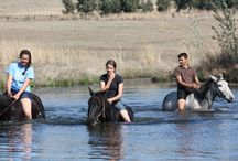 Mooikrans Equus / Lovely horse farm in Mpumalanga