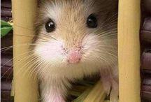 Hamster / by Anna Nabara