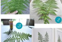 Plantas en cuadros