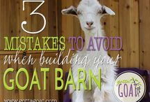 Goats / by Tabitha Perry