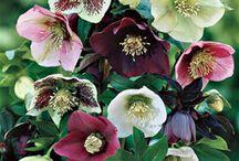 Favourite Flowers / Flowers