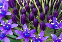 Fleurs / by Melissa Barnwell