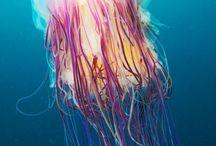 Animals: Sea