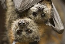 Batty / Bats / by Vonney Bethed
