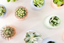 Cacti + succulents and other inspiration  ➰
