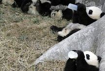 só Pandas