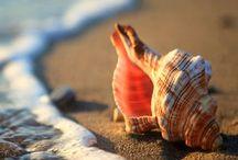 soul-shells :-)