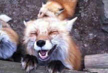 smiling animal