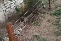 Garden / Making my garden