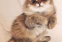 Лиза и котики