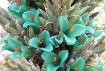 Plantas exóticas / Ao Ar Livre.