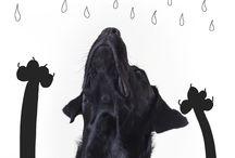 Perros / Fotografías de perros en estudio o en exteriores.