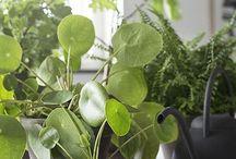 MAMA URBAN JUNGLE // WOHNEN IN GRÜN / Green Living, Zimmerpflanzen, Palmen, Kakteen, Pflanzen, Wohnen mit Kindern, Grünpflanzen