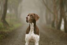 Pups. / by Sadie Bollman