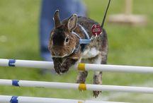 kaniner som er på nettstallen