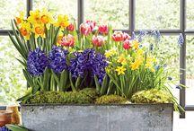 virágok,kertészkedés