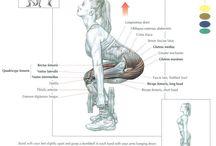 Anatomía de ejercicios