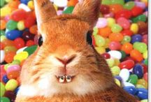Easter / Foods for Easter, Funny Easter pictures