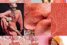 Colour - warm tones / Red, coral, pinks, orange, yellow