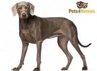 Future Pets :)
