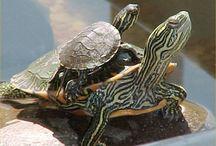 Turtles / by Rhonda Duce