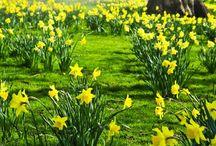 Season ~  Spring / by Sherri DeLarose